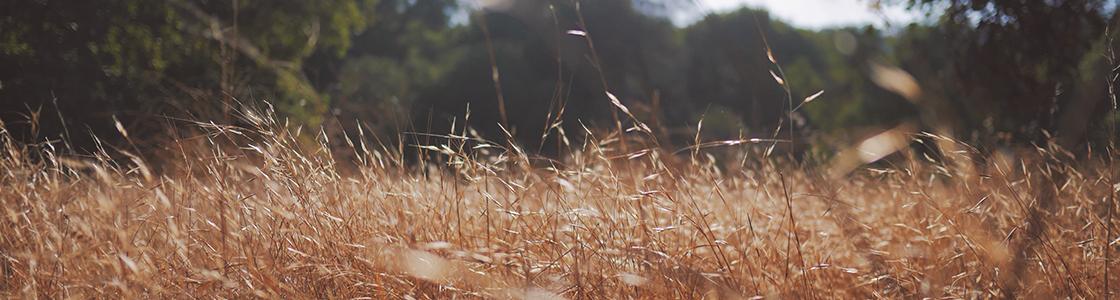 wheat_slie